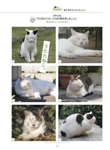 例題と同じ目の猫を探すトレーニング