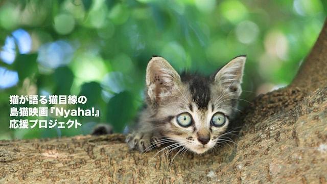 沖縄の島猫映画『Nyaha!(ニャハ!)』に登場する子猫