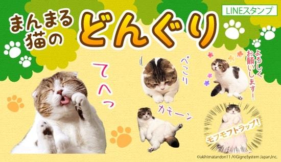 まんまる猫「どんぐり」のLINEスタンプ