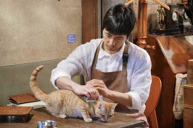 猫をブラッシングする西島秀俊 by ブランケット・キャッツ