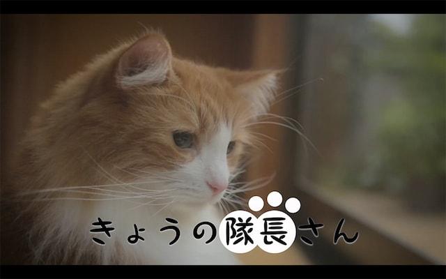 スクスト猫動画、きょうの隊長さん<一喜一憂する隊長さん>編