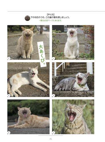 例題と同じ歯の猫を探すトレーニング