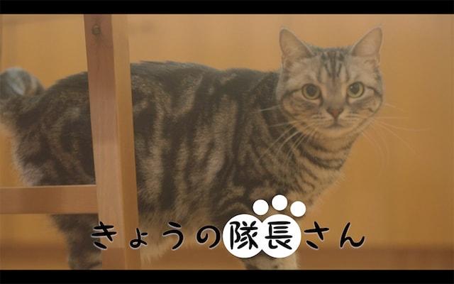 スクスト猫動画、きょうの隊長さん<悩む隊長さん(あんた)>編