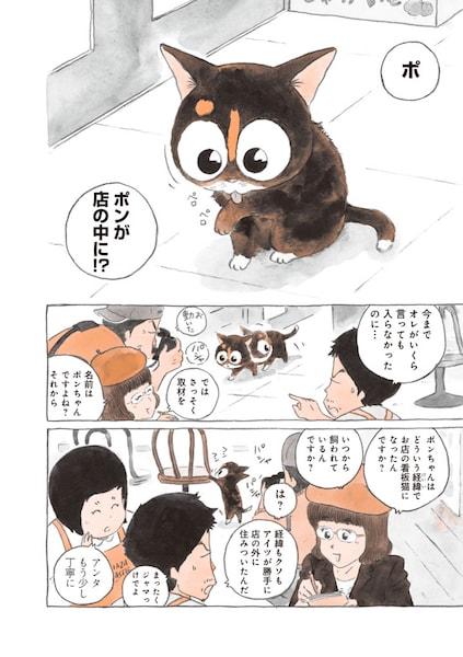 徐々に人間に慣れていく捨て猫のポンちゃん by 「ねことマスター 幸せをよぶ看板猫」