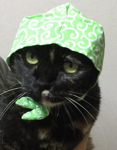 キタンクラブの猫のかぶりものを被っている、