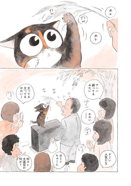 皆に愛されるアイドル猫になったポンちゃん by 「ねことマスター 幸せをよぶ看板猫」
