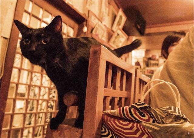 猫がいる酒場 by 猫と呑み助 東京「猫呑み」のススメ
