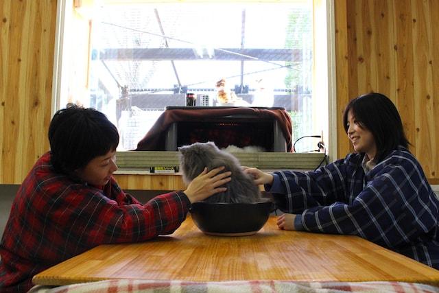 土鍋に入る猫「猫鍋」を愛でる様子