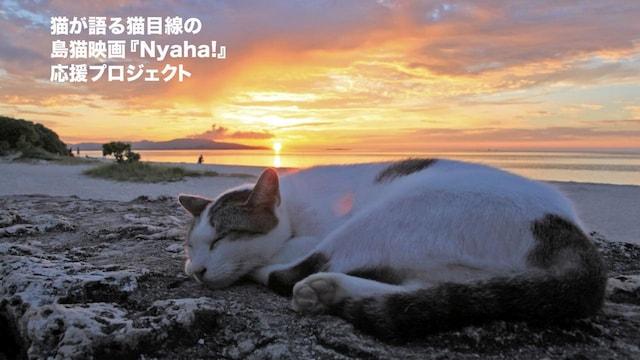 沖縄の島猫映画『Nyaha!(ニャハ!)』、海岸近くで気持ちよさそうに眠る猫