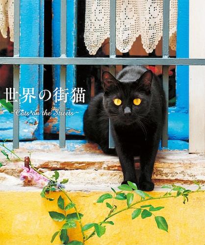 書籍「世界の街猫」の表紙