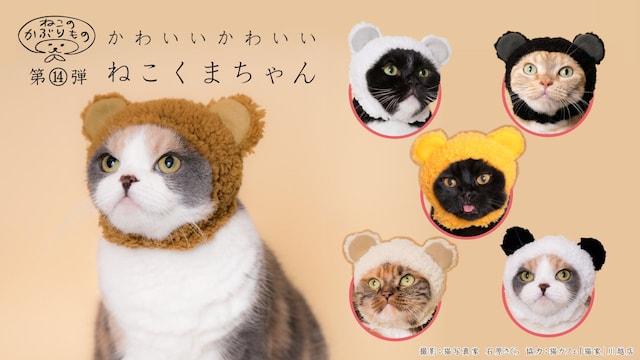 キタンクラブのカプセルトイ、猫用のかぶりもの「かわいい かわいい ねこくまちゃん」