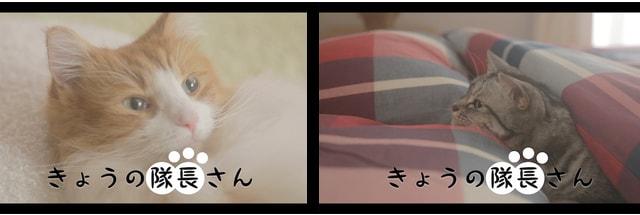 スクストの猫が登場するWEB動画「きょうの隊長さん」第2弾