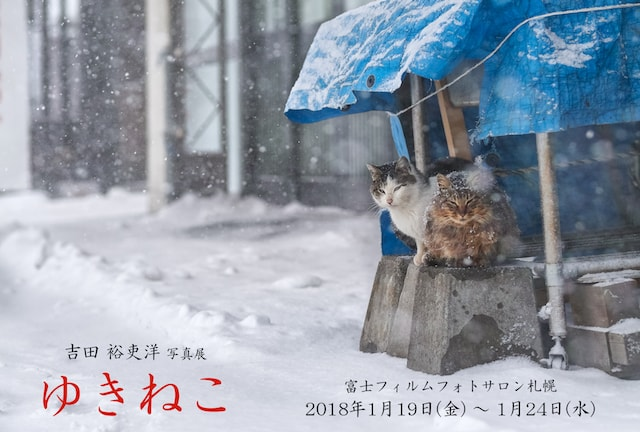 写真家・吉田裕吏洋(よしだ ゆりひろ)さんの個展「ゆきねこ」