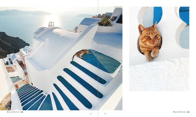 ギリシャ、サントリーニ島の猫