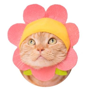 猫用の「お花」のかぶりもの コーラルピンク