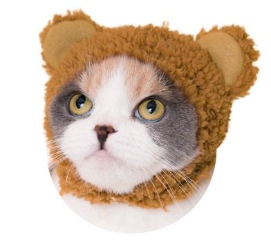 猫用のかぶりもの、クマ×ちゃいろ
