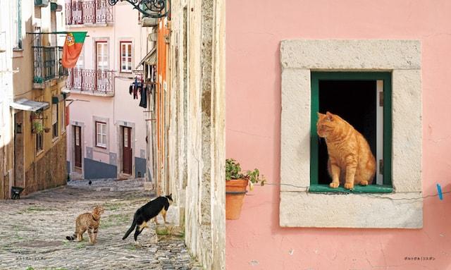 ポルトガル、リスボンの猫
