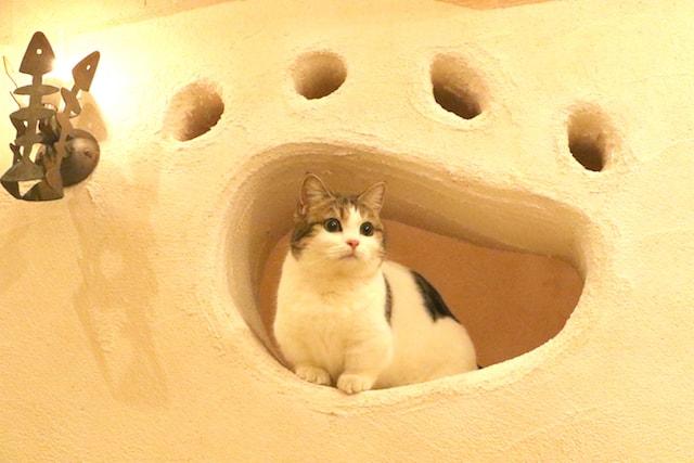 壁に空いた穴でくつろぐ猫 by Cat Cafe てまりのおしろ