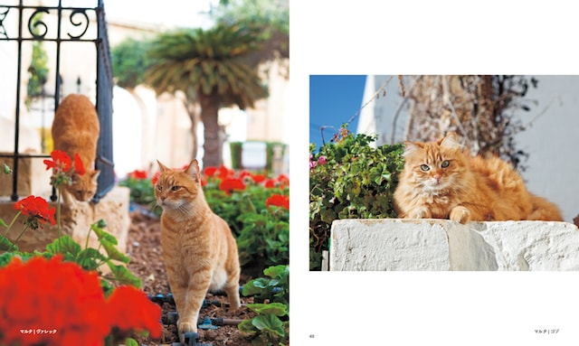 マルタ、ヴァレッタの猫