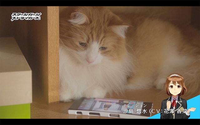 スクスト猫動画・きょうの隊長さん「悩む隊長さん」編のシーン3 by ナレーション:沙島 悠水(CV: 花澤 香菜)