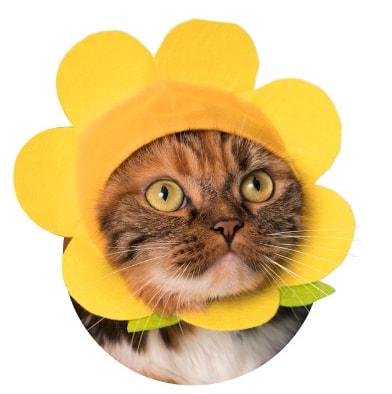 猫用の「お花」のかぶりもの イエロー