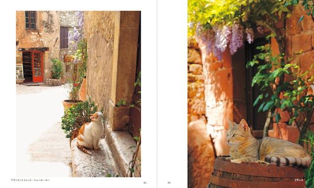 フランス、トゥレット・シュル・ルーの猫