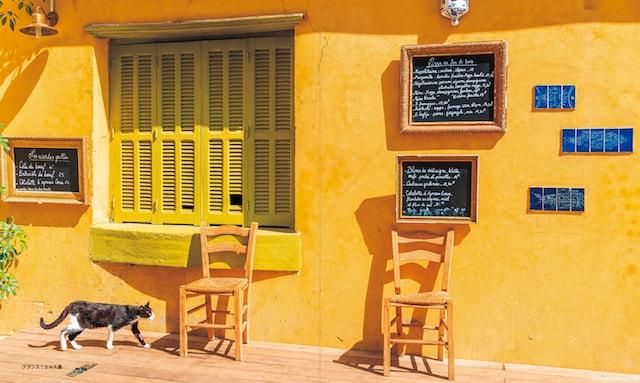 フランス、コルス島の猫
