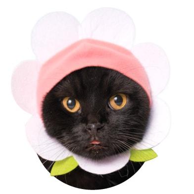 猫用の「お花」のかぶりもの ホワイト