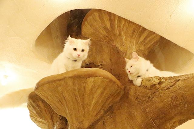 SNS映えしそうな猫カフェの店内