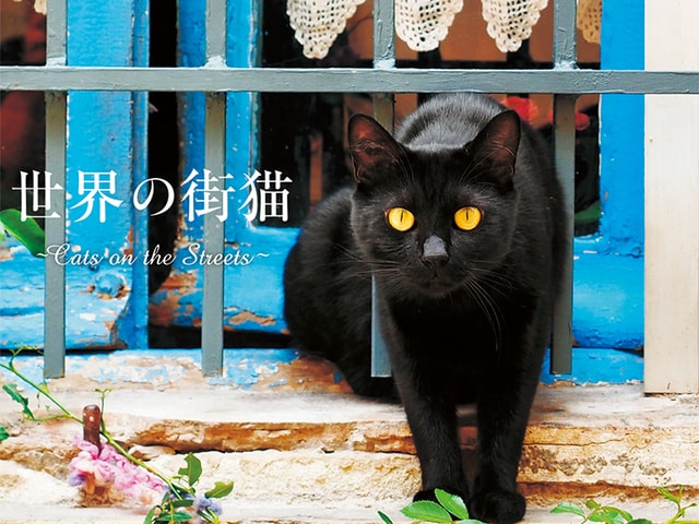 ギリシャやマルタなど、猫のいる街の風景を収録した「世界の街猫」
