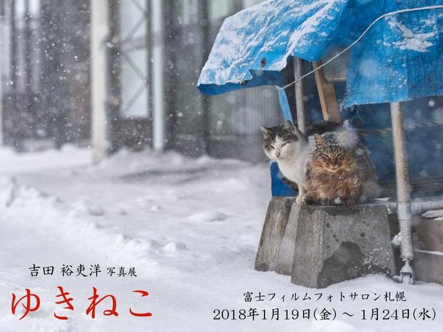 テーマは雪と猫!写真家・吉田裕吏洋氏の個展「ゆきねこ」が1月に開催