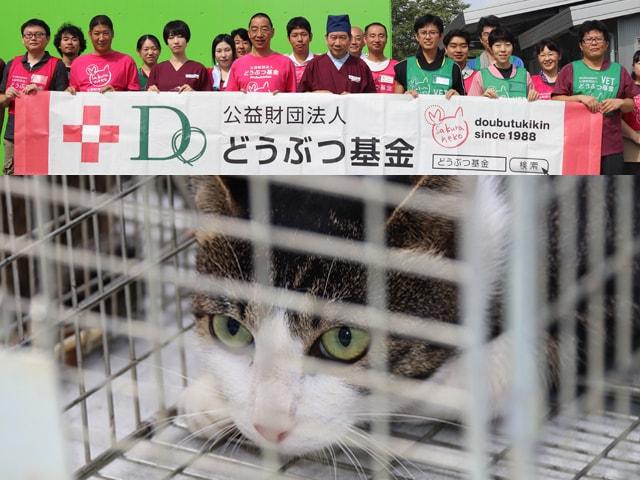 猫の殺処分ゼロを目指し、どうぶつ基金×三重県による取り組みが継続中
