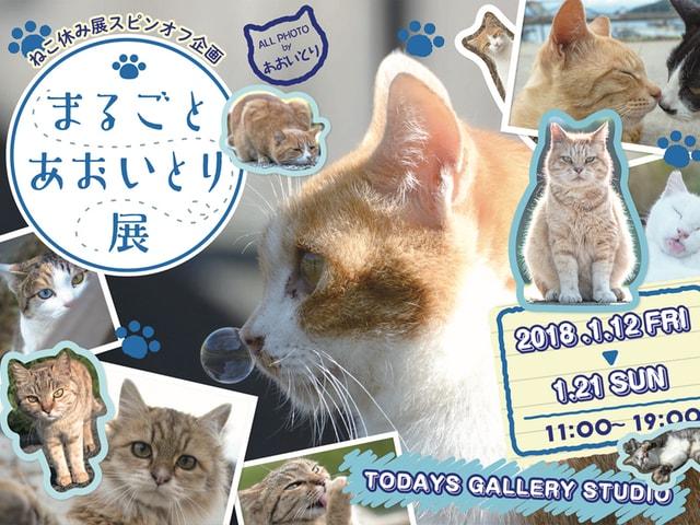 ネコ写真家・あおいとり氏が活動休止を発表、最後の個展が来月開催