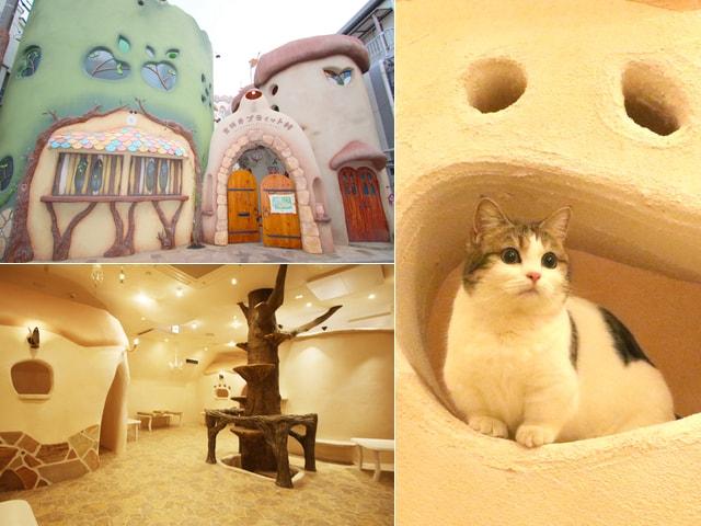吉祥寺の新スポット!不思議なネコのお城「Cat Cafe てまりのおしろ」