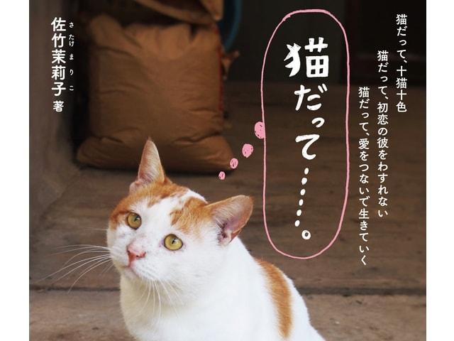 22匹の猫たちがネコ目線で語るとっておきの愛の物語「猫だって……。」