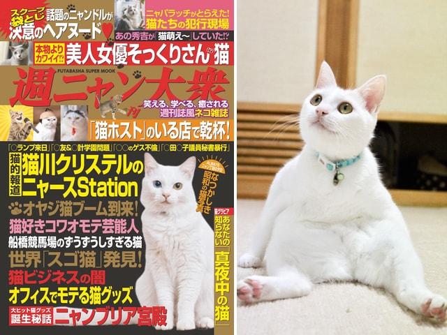 ネコ界のスクープが目白押し!週刊大衆の猫バージョン「週ニャン大衆」