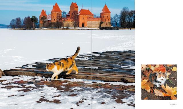 リトアニア(トラカイ)の猫、ウクライナの猫