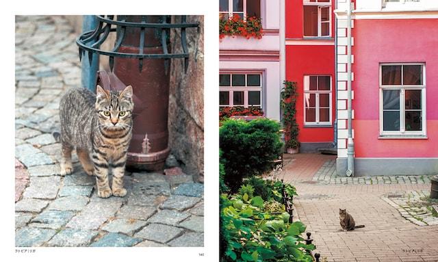 ラトビア(リガ)の猫
