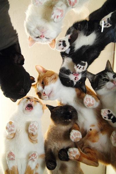 透明なアクリル版越しに見た猫たちの肉球 by ネコの裏側