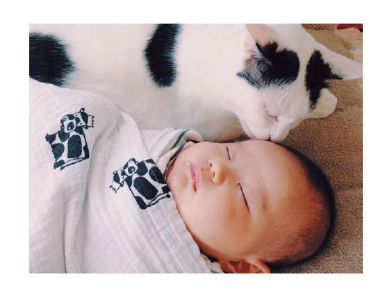 人間の赤ちゃん「たい」を可愛がる猫の「ザクロ」