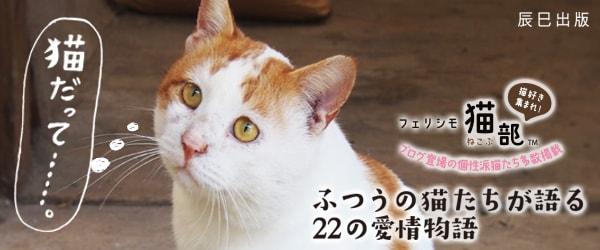 「道ばた猫日記」を書籍化した「猫だって……。」