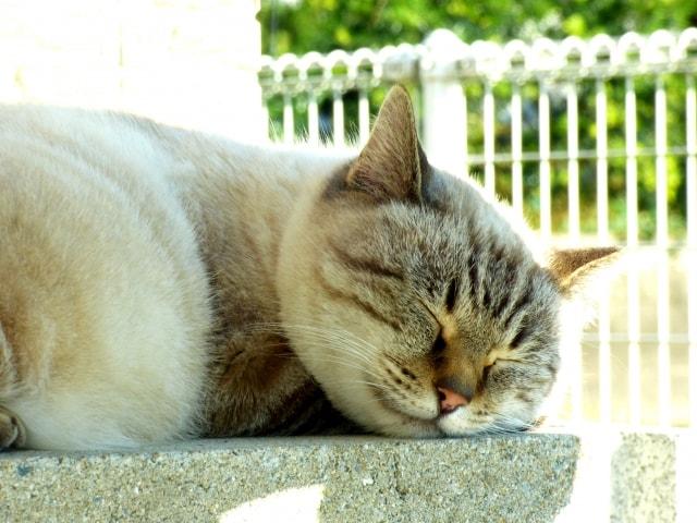 気持ちよさそうに眠る猫のイメージ写真(AC)