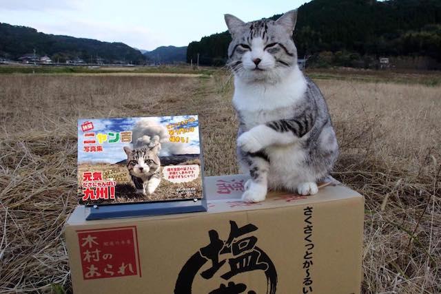 サバ白猫の旅猫ニャン吉