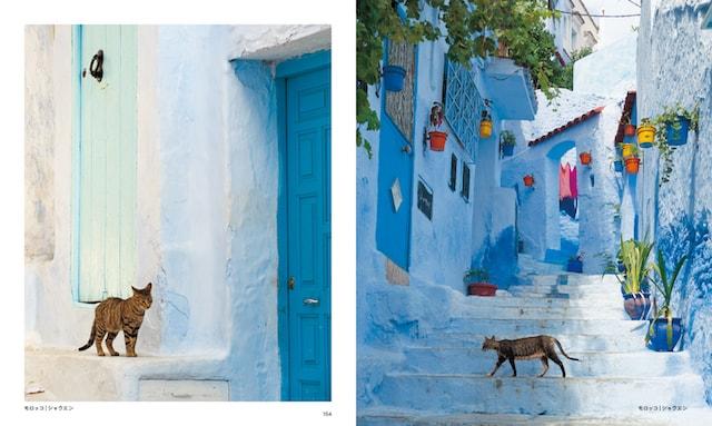 モロッコ(シャウエン)の猫