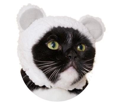 猫用のかぶりもの、クマ×しろ