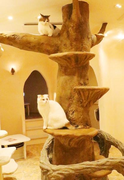 キャットタワーでくつろぐ猫たち by Cat Cafe てまりのおしろ