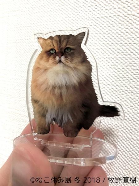牧野直樹×スター猫のコラボグッズ