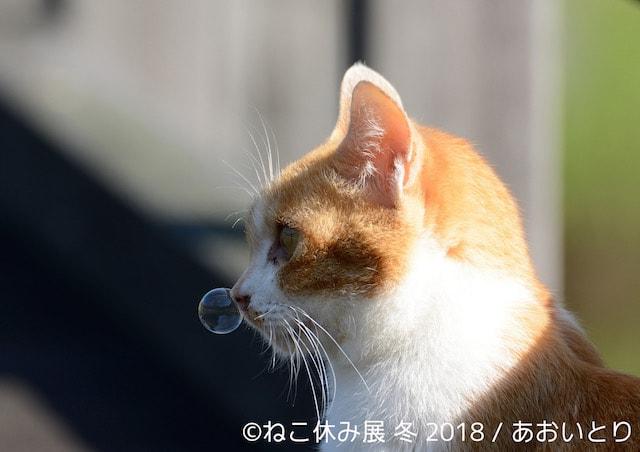 サラリーマン写真家・あおいとりの鼻提灯猫
