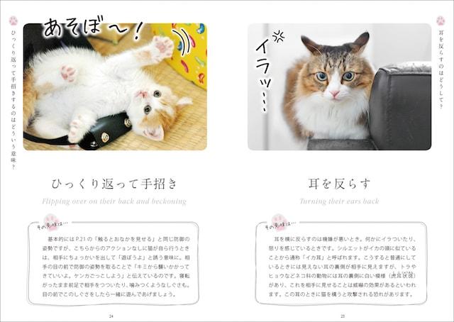 猫が耳を反らす仕草を解説 by ねこ語会話帖