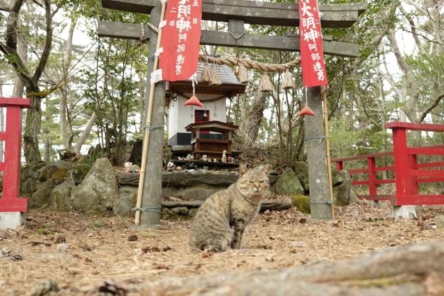 田代島にある猫神様が祀られた「猫神社」(AC)